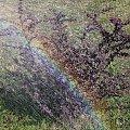 #Bralin #wiosna #krzew #krople #tęcza