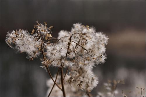 jesienne pozostałości po kwiatach... #jesień #jezioro #kwiaty