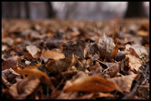 Jesień... wróciła na chwilke #liście #jesień #Chorzów #WPKiW