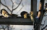 http://images36.fotosik.pl/133/914254369e1d841cm.jpg