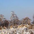 zimowy pejzaż #Pejzaż