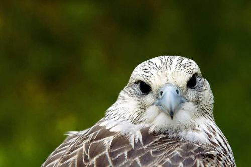 Ptak - orzeł #Ptak #orzeł