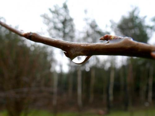 łzy na wierzbie #deszcz #PoDeszczu #wiosna