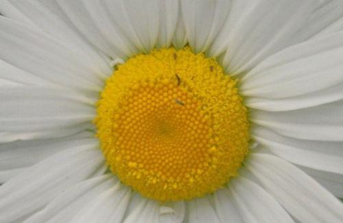 #przyroda #kwiaty #makro