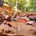 #jesień #las #ścieżka #liście #ściółka