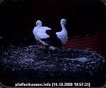 http://images36.fotosik.pl/20/f20d0bfbec23a1a2m.jpg