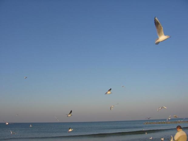#ptaki #mewy #morze