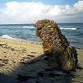 Kuba-leżący parasol #plaża #Kuba #morze #parasol #wypoczynek