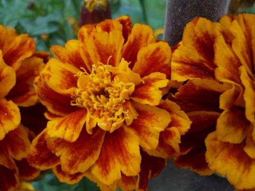 #kwiaty