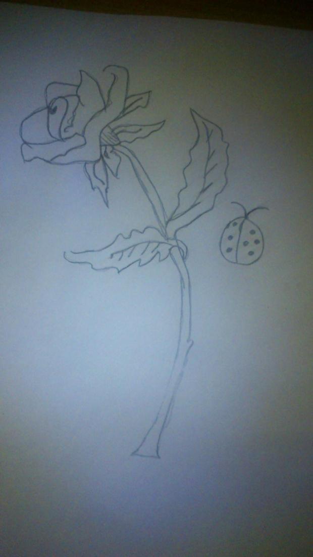 #róża #kolce #biedronka