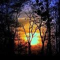 Zachód słońca 4.XII.2008 #ZachódSłońca #drzewa #grudzień