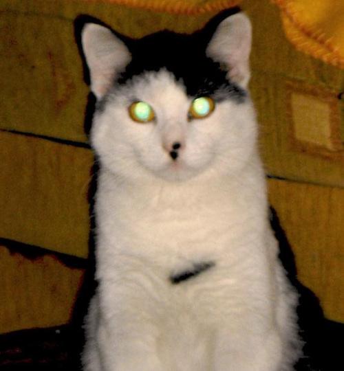 Zdziwiony Macius, ze ktos osmiela mu sie po oczach swiatlem blyskac