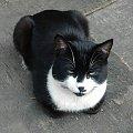 Czarnuch na zakrytej piaskownicy #kot #kotka #pies #suczka #zwierzaki #zwierzęta