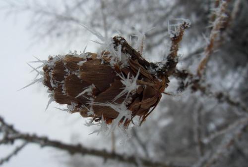 Szyszunia :) #lód #Sztolnie #zima