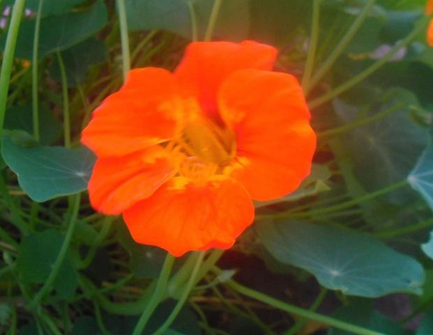 natura #natura #przyroda #rośliny #liść #kwiat