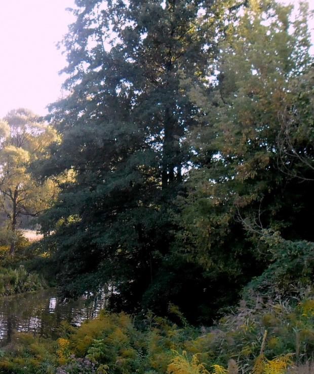 natura #natura #drzewa #las #rzeka #rośliny #lasy #przyroda