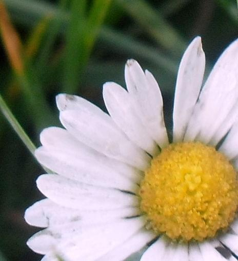 Zdjęcie konkursowe #przyroda #natura #rośliny #liść #kwiat