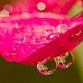 kap, kap #krople #lód #macro #odbicia #woda