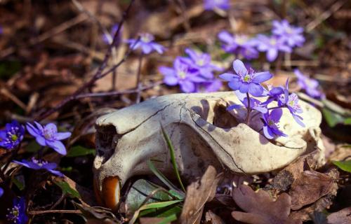 wiosenna kompozycja.. #flora #kwiaty #makro #natura #przylaszczka #PrzylaszczkaPospolita #przyroda #wiosna