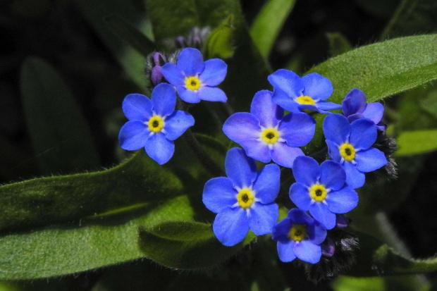 kwiatki z bajki...:) #evasaltarski #kwiatki #niezapominajki