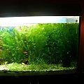 #akwarium #roślina #roslina #akwa #holender #roślinne #wodaryba #ryby #mieczyk #neon #skalar