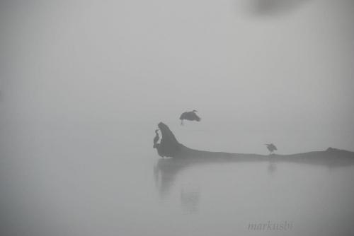 czapla ląduje #las #woda #park #zieleń #ptaki