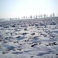 #zima #PoraRoku #pole #śnieg #zimno #mróz #lody #krajobraz #piękne