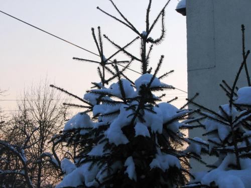 choinka #Drzewa #przyroda #widok #choinka