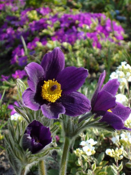 Zdrowych,spokojnych i pełnych ciepła Świąt Wielkanocnych:) #kwiaty #wiosna #natura